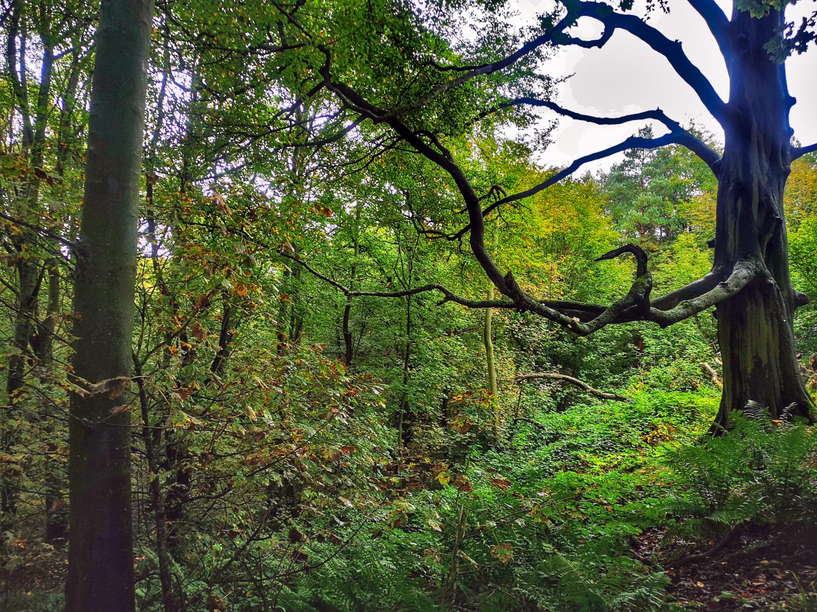 Badby Woods