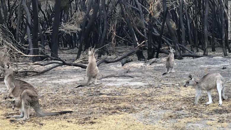 Australia PM Scott Morrison defends coal industry amid catastrophic blazes